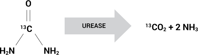 Illustration of the conversion process